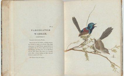 File:John Lewin - Birds of New