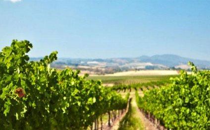 Koomooloo vineyard planted by
