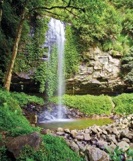 Crystal Shower Falls, Dorrigo Nationwide Park. Image: R Cleary viewed Australia/OEH.