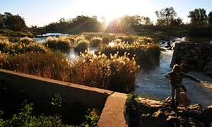 the sunlight establishes over reeds since the ancient fishtraps in Brewarrina